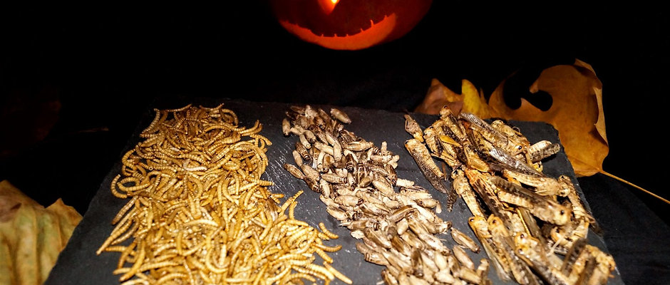 Halloween - Essbare Insekten 100 g
