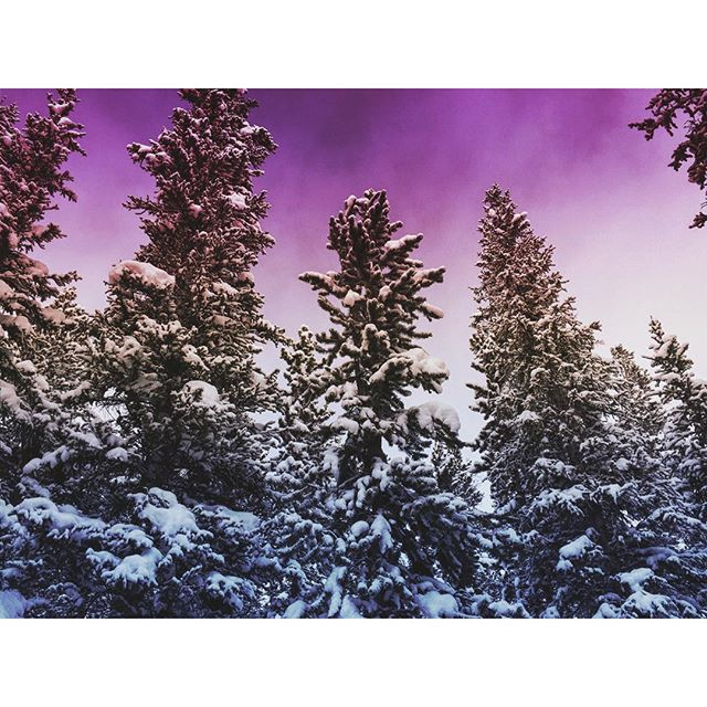 Amongst the Trees I Feel at Ease