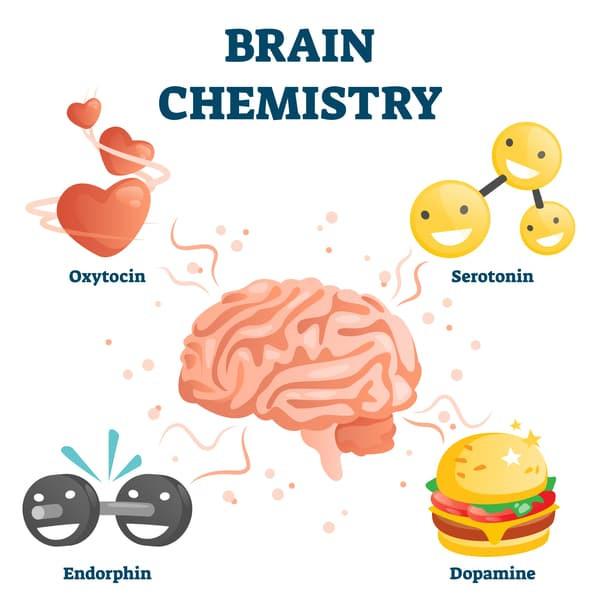 Brain chemistry infographic with oxytocin, serotonin, endorphon and dopamine
