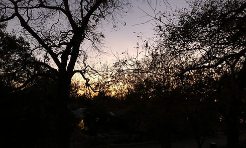 Sunset trees.jpg