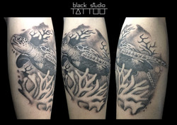 tartaruga tattoo
