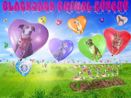 2020 Blackjack Animal Rescue Calendar