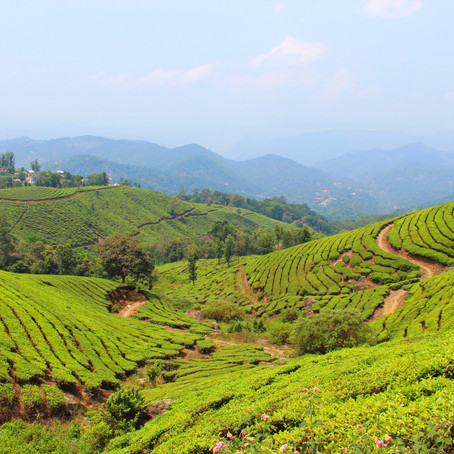 Our quick getaway to Munnar