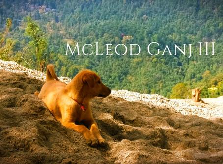 The Unplanned Trip – McLeod Ganj III