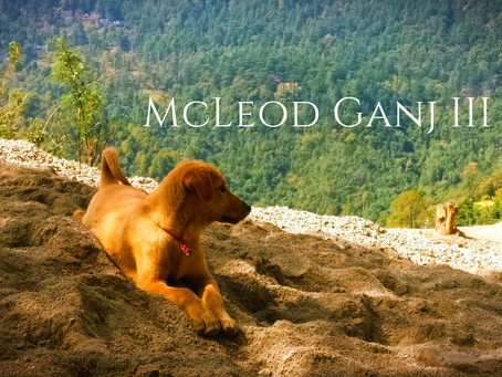 The Unplanned Trip – McLeod Ganj III