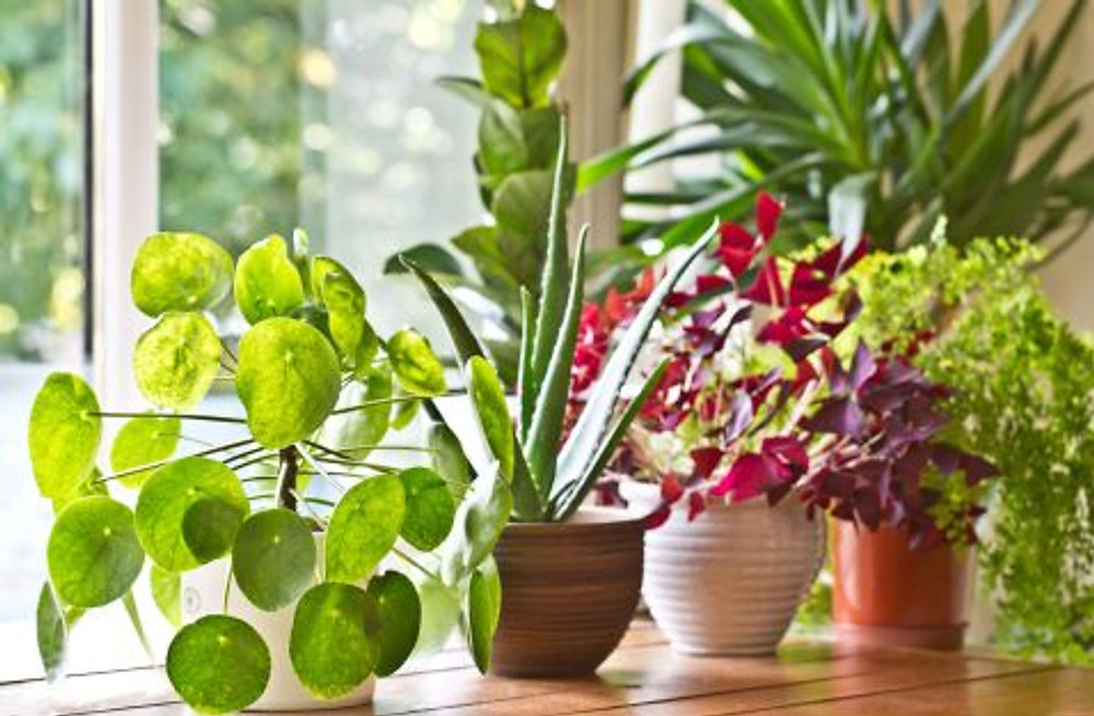 pot-plants-display-on-the-window-royalty-free-image-839958870-1546891041