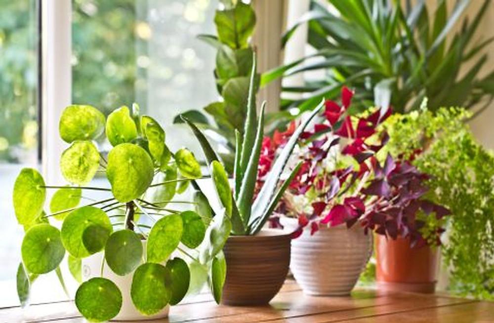 pot-plants-display-on-the-window-royalty-free-image-839958870-1546891041