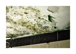 Prevent mold in your home