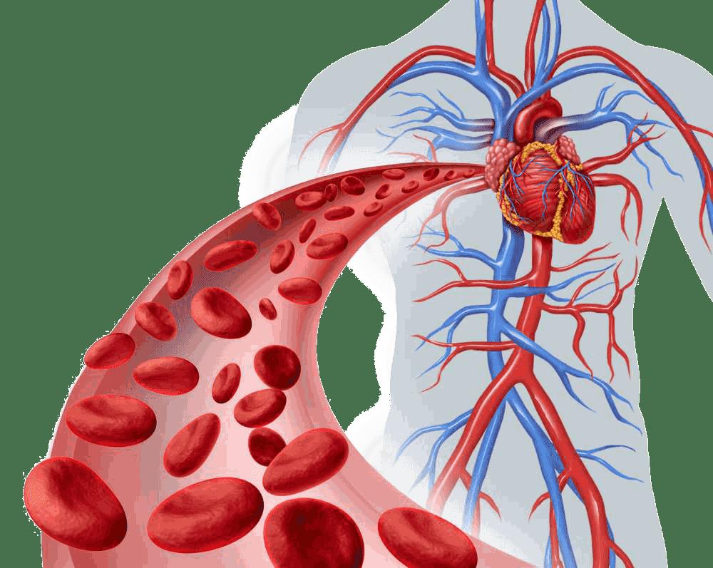 Inversion-Table-Enhances-Blood-Circulati