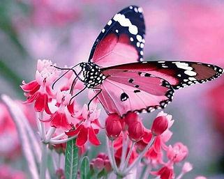 vlinder_edited.jpg