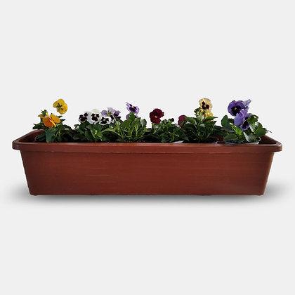 אמנון ותמר (פרחים גדולים) - אדנית 80