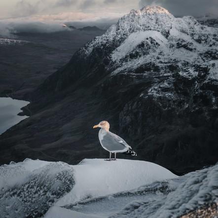 Snow Season for Photographers