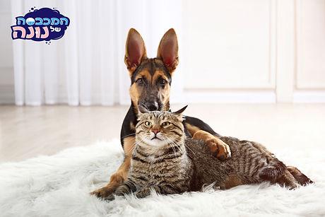 שטיח-כלב-חתול.jpg