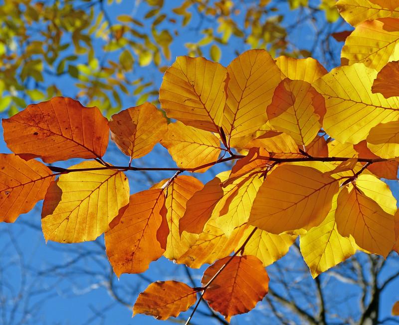 foliage-539413_1920jpg