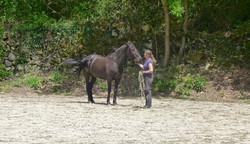Hevosen työskentely vapaana