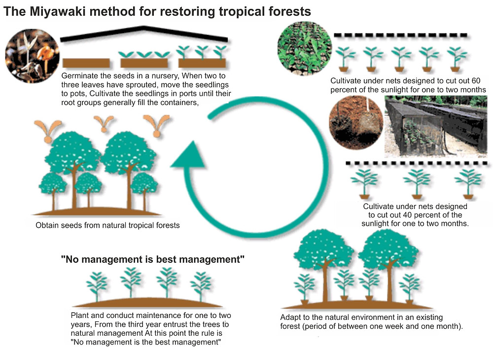 Applying the Miyawaki method to tropical forests restoration to fight global warming. Climate Coping.