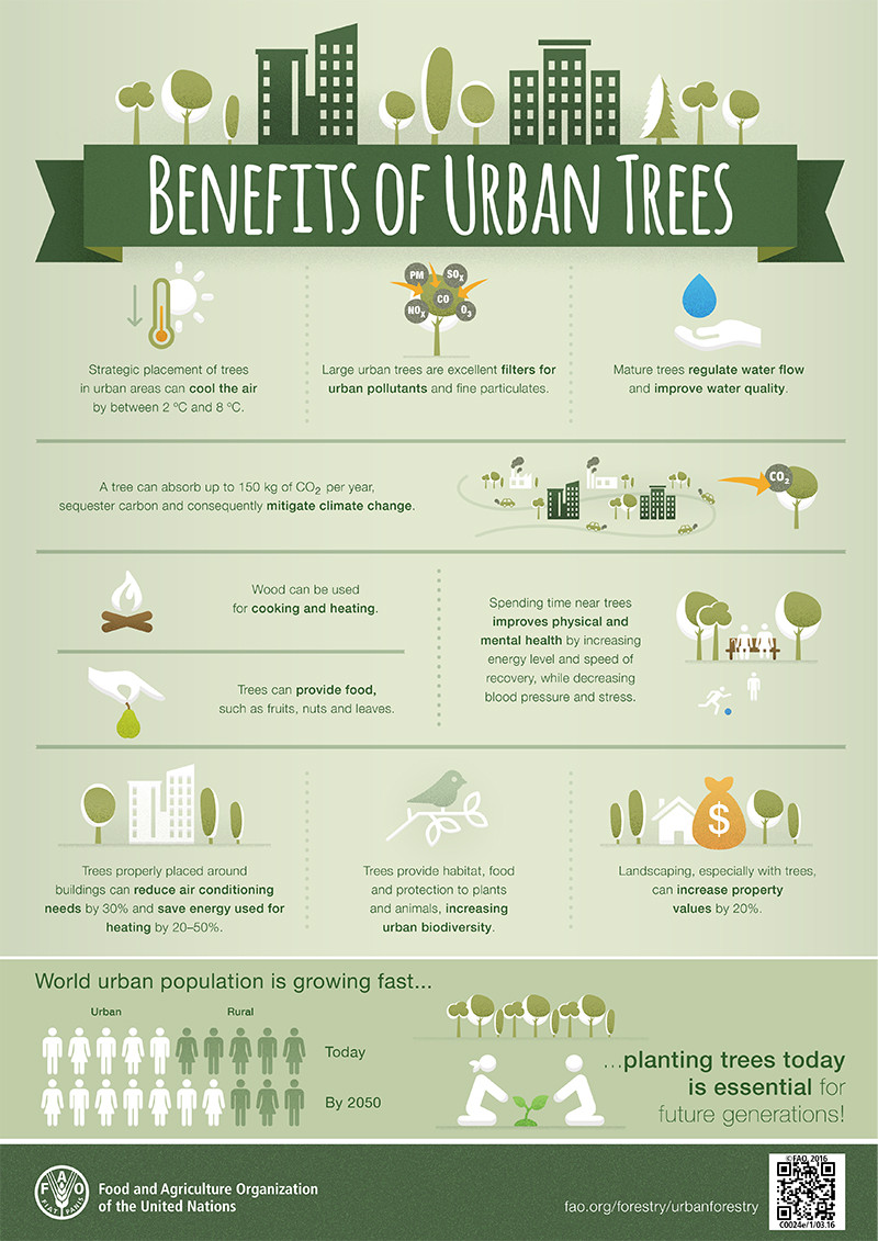 What are the benefits of urban trees? by FAO. Infographic Climate Coping. Protect your city from global warming.