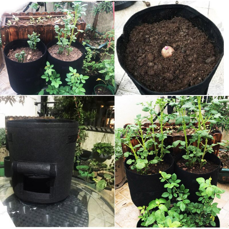 Use these growing bags to have fruits and vegetables growing in a sustainable way on your terrace or balcony. Be more sustainable, waste less and be more resilient for global warming. Climate Coping.