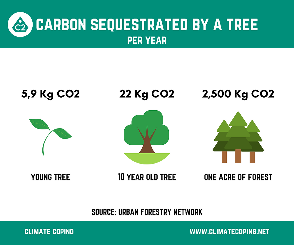Average CO2 sequestration by a tree (young, 10 year old or one acre of forest). Infographic Climate Coping. Carbon Capture, offset your footprint.