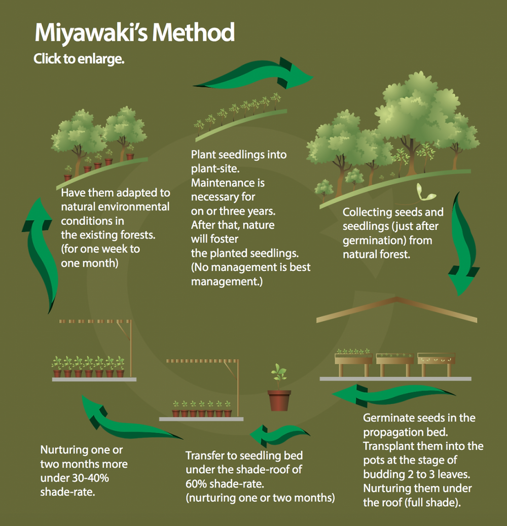 Infographics. Miyawaki's method to plant tiny urban forests resilient to cope with global warming. Climate Coping.