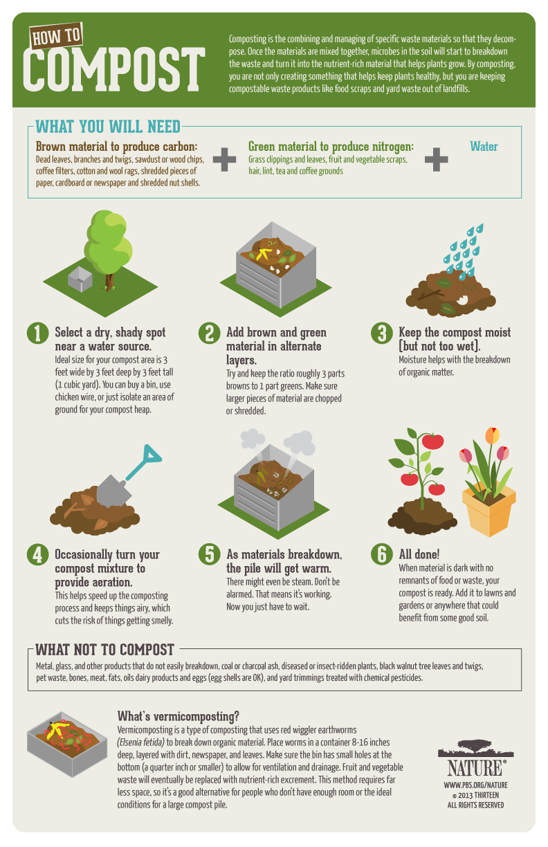Infographic. How to Compost your Kitchen Waste, by Karen Brazell. Climate Change. Coping Guide. Global Warming. Sustainability.