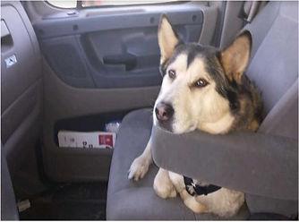 Foxy the Road Dog from Montana 2.jpg