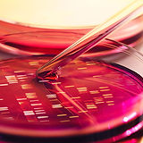 DNA testing sri lanka