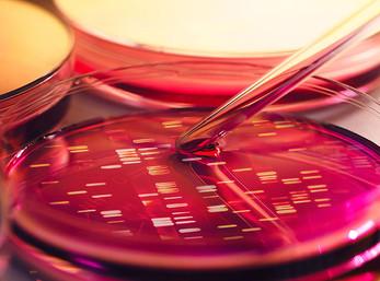 Infections à Clostridium difficile : quelle prise en charge ?