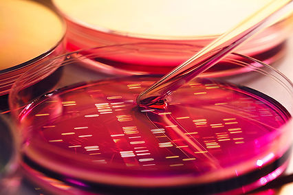 petri dish for research