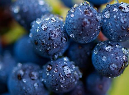 Pinot Noir: um tinto leve para iniciantes