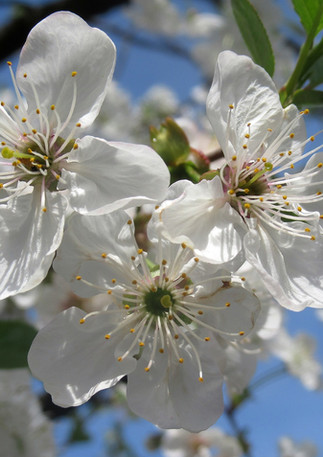 flower-3334312_1920.jpg
