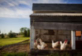 chicken-coop-343942_1920.jpg