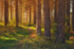 forest-89179.jpg
