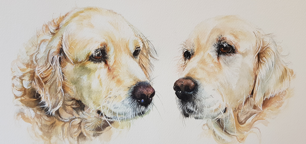 Rory and Finn Golden Retrievers Watererc