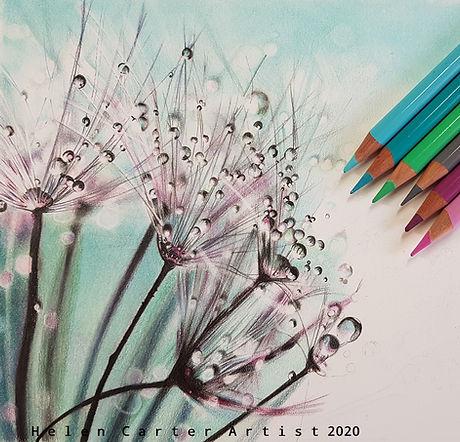 Dandelion wip.jpg