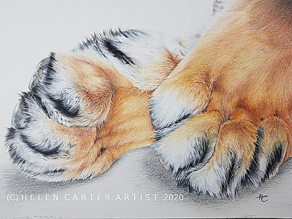 I Really Love Your Tiger Feet