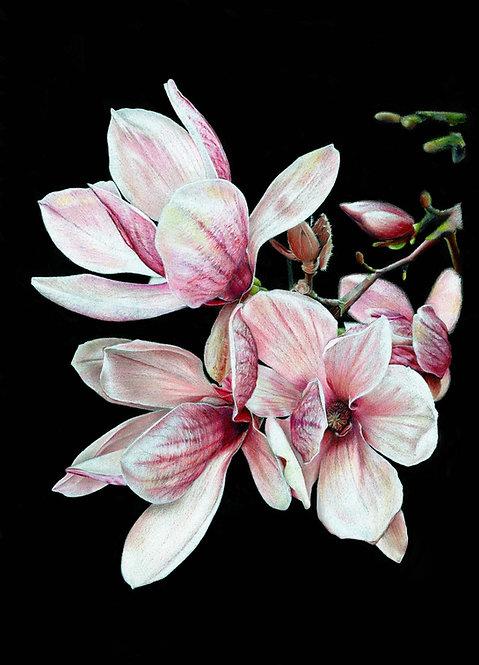 Magnolia on Black - PRINT
