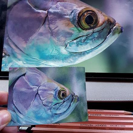ATC fish