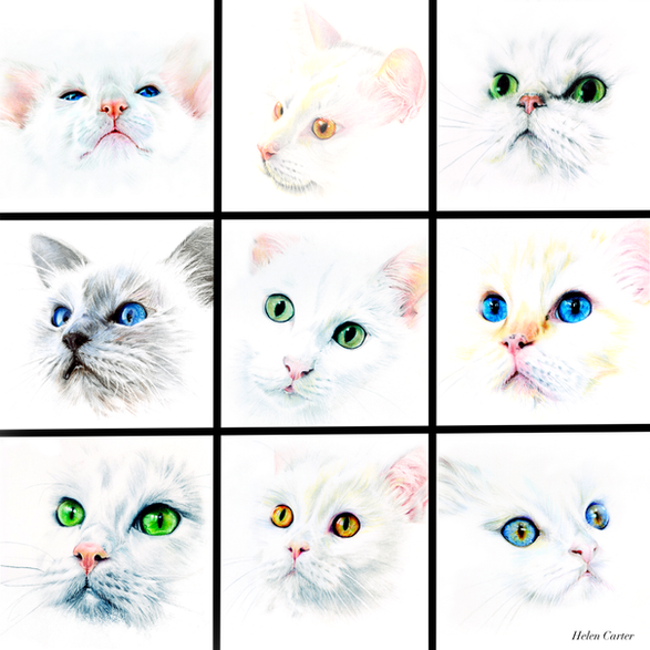 White Cat Project