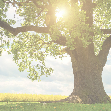 The Tree of Accountability: Using Evaluation to Promote Growth