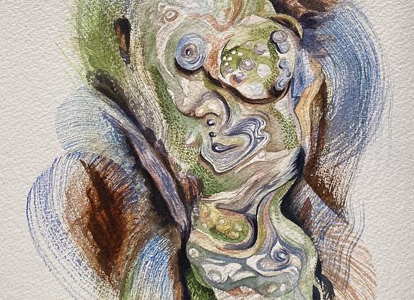 Burl Study (Grove of the Patriarchs, Mt Rainier National Park)