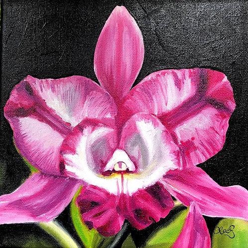 Cattleya - Original Painting
