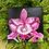 Thumbnail: Cattleya - Original Painting