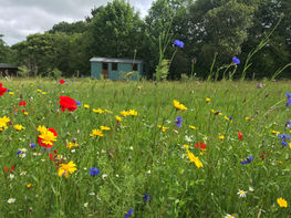 meadow & hut.jpeg