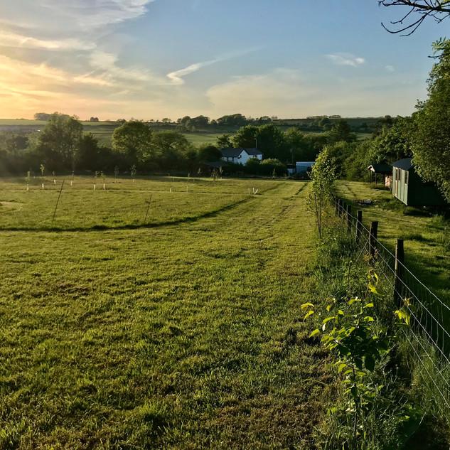 meadow sunset.jpeg