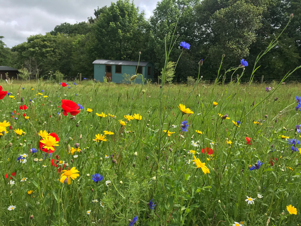 meadow & hut.jpeg
