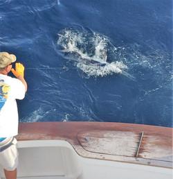 fishbone fishing
