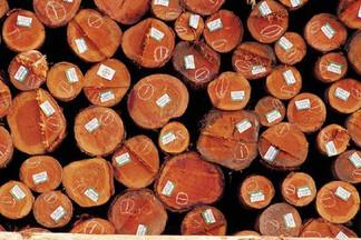 As empresas madeireiras do Pará ganham mais uma oportunidade para produzir e comercializar madeira l