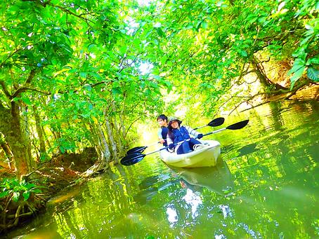 西表島でジャングル探検💚🌴マングローブカヌー🛶