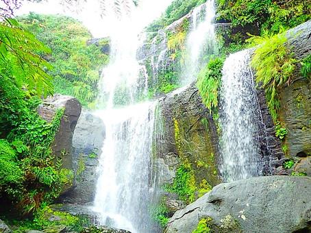 亜熱帯ジャングル西表島〜自然を感じる島旅をしよう🌴💚